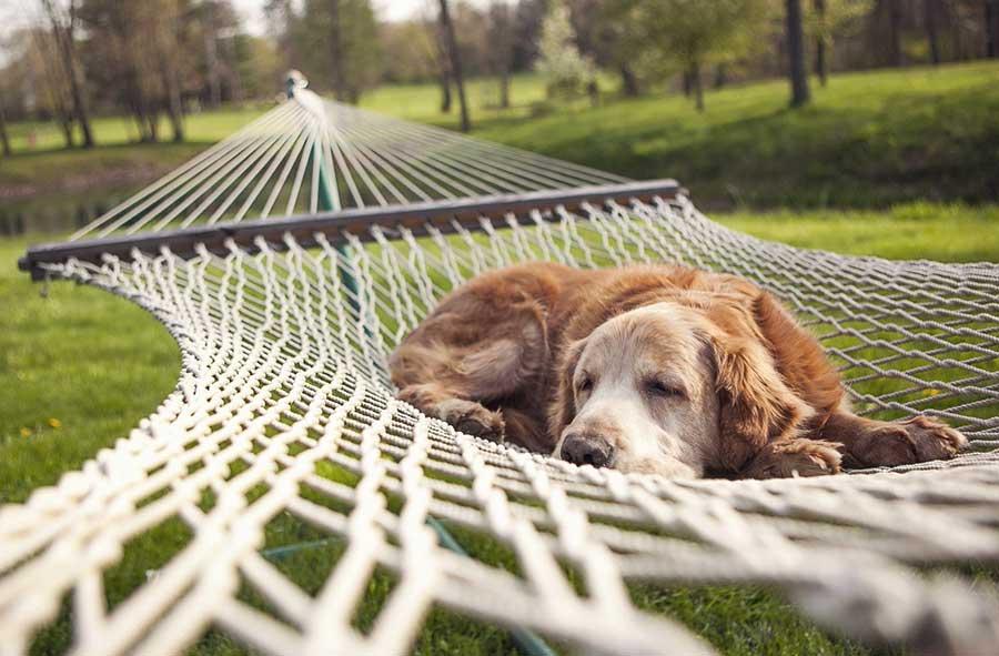 pet-angel-blog-arthritis-dogs