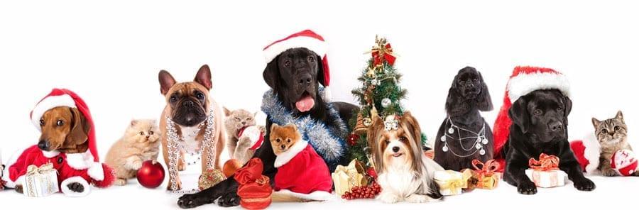 pet-angel-blog-pets-at-christmas