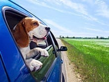 Motion Sickness in Dogs