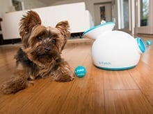iFetch: The Automatic Ball Launcher for Dogs