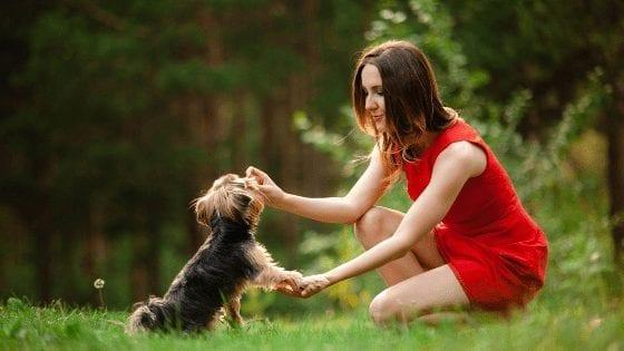 5 Ways to Encourage Positive Dog Behaviour