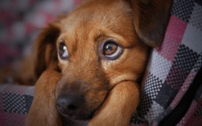 Deciding the Right Time to Say Goodbye to Your Family Pet