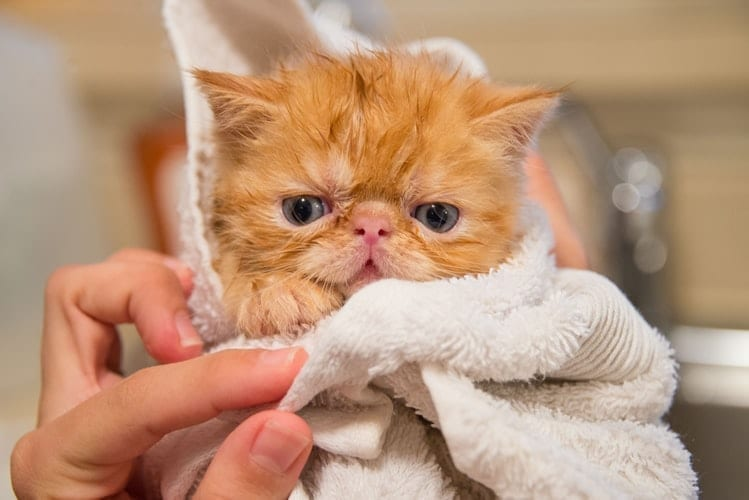 How To Wash Cats…The Stress-Free Way!