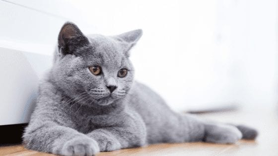 How Long Can Cats Live And How To Keep Them Living Longer
