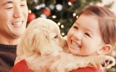 Why You Should Avoid Gifting Animals This Christmas