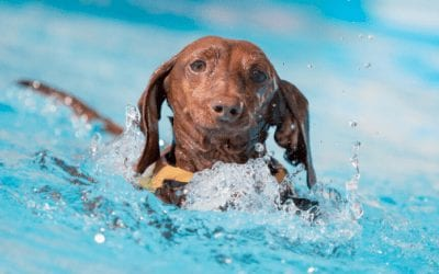 Pet Water Safety During Summer Season