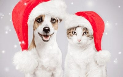 Top 6 Christmas Gift Ideas for Your Furry Friends