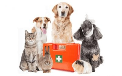 First aid for pets: How we can help our furry friends in their time of need