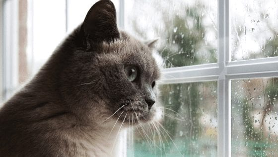 Is It Time To Say Goodbye? Signs Your Pet Cat Is Dying