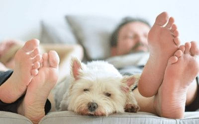 Pet-Proofing Your Home 101