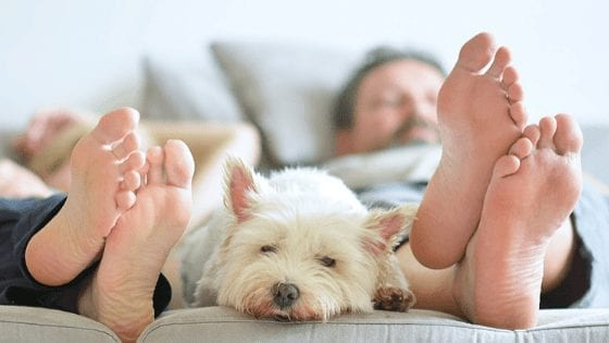 Pet Proofing Your Home 101