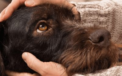 Cancer in Pets – Symptoms and Signs to Look in your Pet