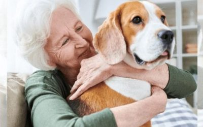 Tips for Celebrating National Love Your Pet Day