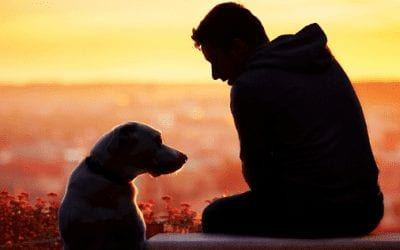 Is It Time To Say Goodbye? Warning Signs A Dog Is Dying
