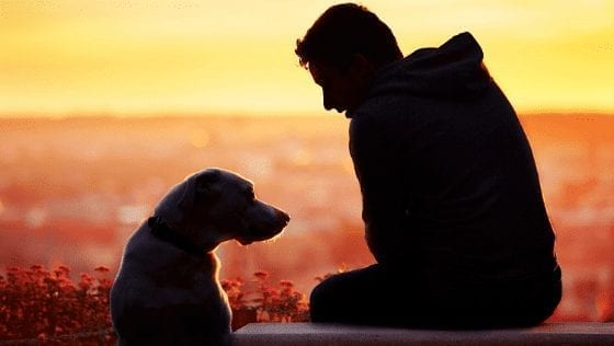 Is It Time To Say Goodbye? Signs Your Pet Dog Is Dying