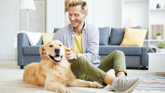 Indoor Activities For Dog