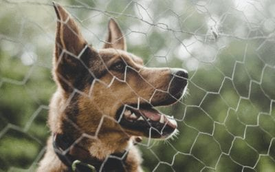 How To Stop Dogs From Jumping Fences