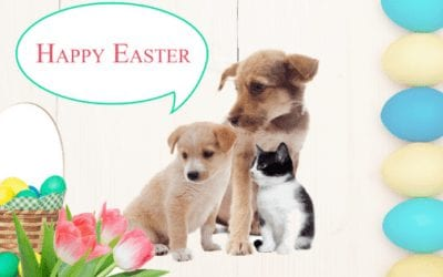 Toxic Foods Not On The Menu This Easter For Our Furry Friends