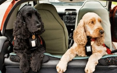 Keeping Your Dogs Safe In Cars