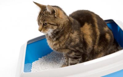 Choosing The Right Cat Litter