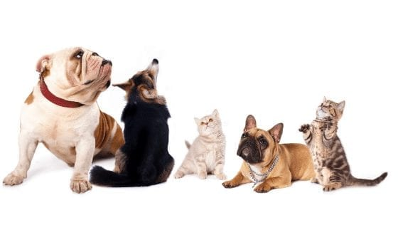 Communicating With Pets: Can Our Animal Best Friends Understand Us?