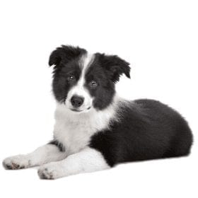 Dog Breeds And Their Characteristics