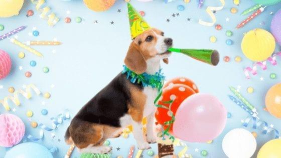 10 Paw-some Ideas To Celebrate International Dog Day