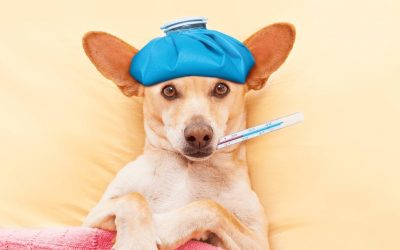 4 Common Health Issues In Dogs: Symptoms, Causes, Treatments