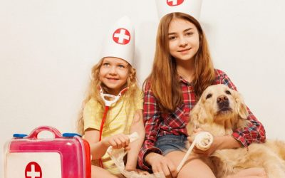 How To Give Proper Pet First Aid For Common Injuries