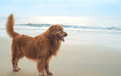 Heatstroke In Dogs: Symptoms, Prevention And Breeds That Are Most At Risk