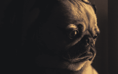Can Dogs Grieve?