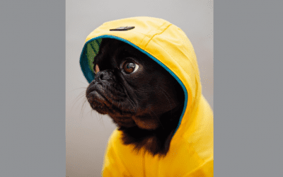 5 Essentials To Enjoy A Rainy Day Walk With Your Dog
