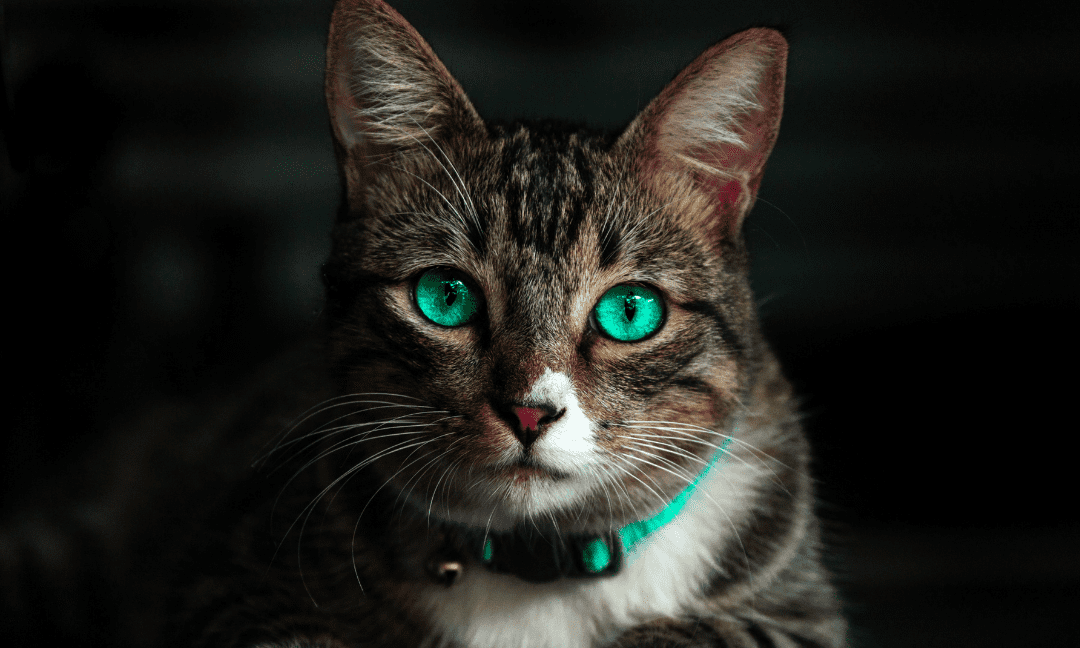 Cat Eye Infections: Do You See The Signs?