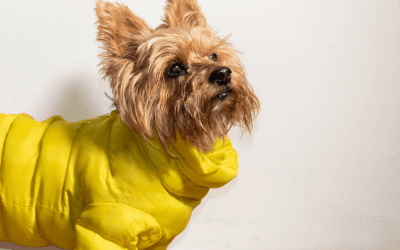 How To Tell Your Dog Is Cold And Needs A Jacket