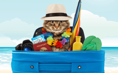 How To Choose The Best Destination For A Pet Friendly Holiday